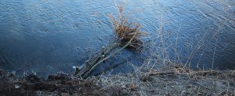 Totholzbuhnen für mehr Strömungsvarianz